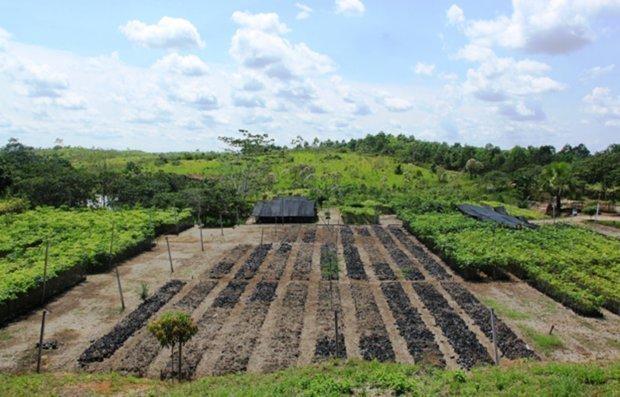 Programa de Desarrollo Forestal, Sostenible, Inclusivo y Competitivo en la Amazonía Peruana