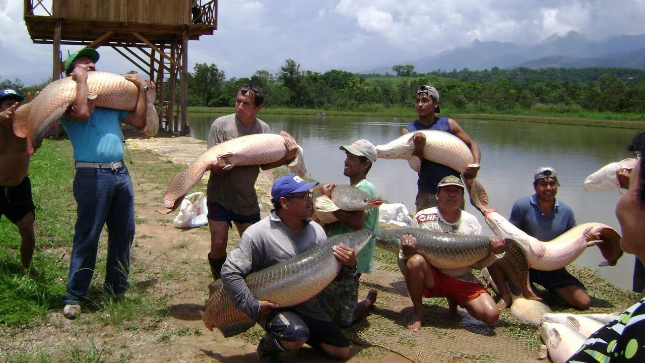 Comunidades nativas ser n beneficiadas con proyecto de for Criadero de camaron en estanques circulares